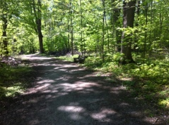 Nature Path600_421740642