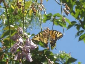 butterfly600_431042562